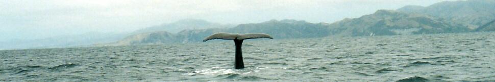 Neuseeland - Whale watching Kaikoura